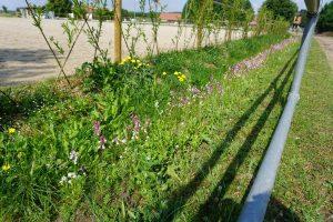 Blühpflanzen im Offenstall