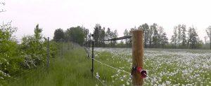 Weidepflege ökologisch