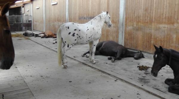 schlafende Pferde Offenstall