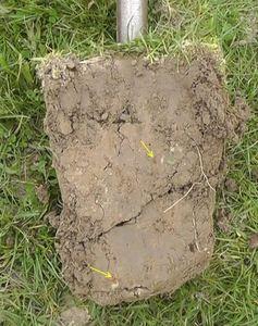 Boden Offenstall Pferdegräser