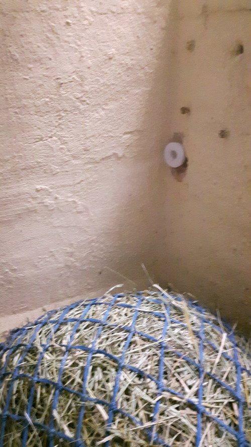 Solebox Offenstall Hustenpferde
